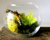 Weathered Wood And Moss Terrarium Set