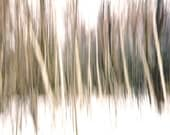 """Abstract landscape woodland surreal minimal spring brown beige trees cream nature  - """"Forest Edge"""" 8 x 10"""