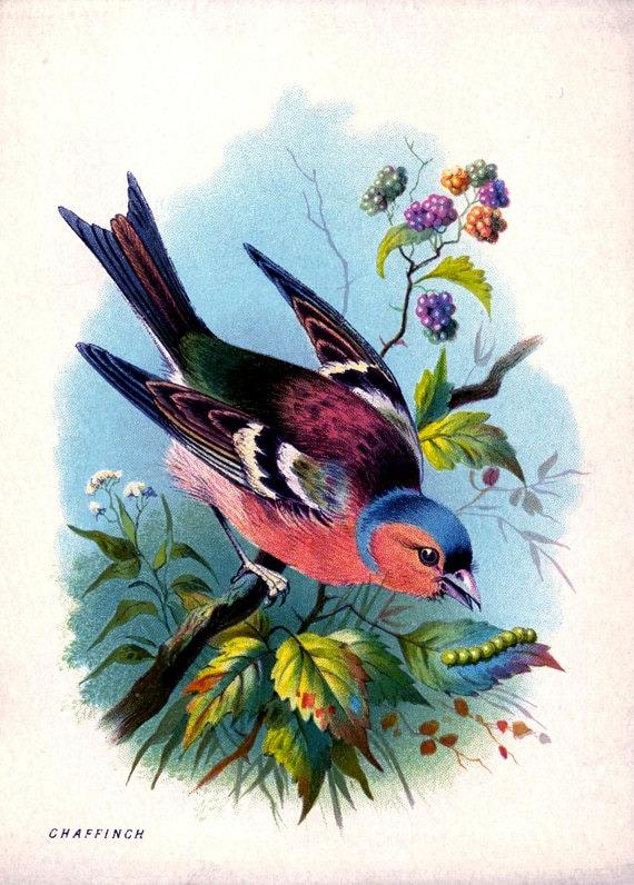 "Vintage Woodland Print ""Rainbow Bird"" Bright Colourful Natural History Illustration - Bird Feathers Colorful"