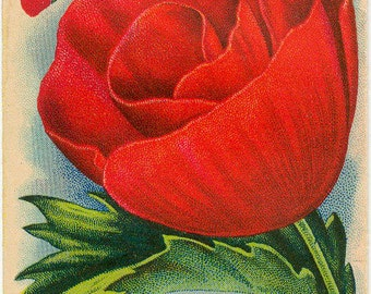 POPPY! (Flanders) Vintage Flower Seed Packet Tucker's Seed House Lithograph (Carthage, Missouri)