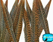 "Natural Tail Feathers, 10 Pieces - 10-12"" Golden Pheasant Tail Feathers : 2123"