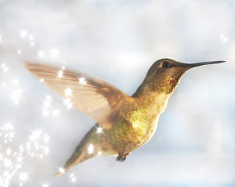 "Hummingbird Photograph 8""x10"" print, Wall Art, Home Decor"