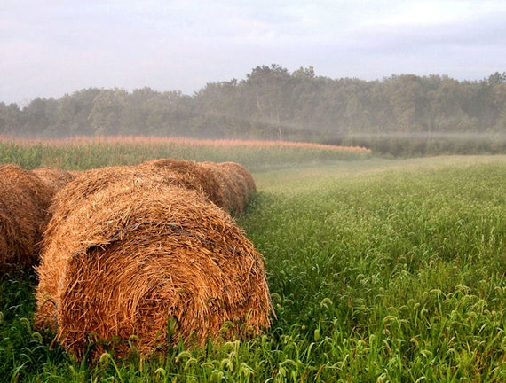 Rural Photography Farm Scene Round Hay Bales Fine Art