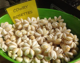 100 cowry rosettes