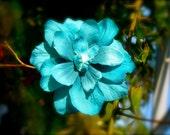 Flower Hair Clip-Turquoise Blue-Floral Hair Clip, Weddings, Bridesmaid Hair, Beach Weddings, Summer Hair Clip, Teal Blue, Hair Accessories