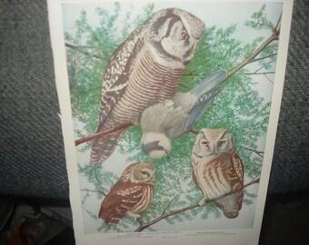 1936 Owl Print     Plate 55 and 56