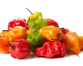 Organic HABANERO Pepper Seeds
