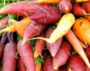 Carrot, Heirloom Rainbow Carrot Seed Mix - Brilliant Bold,Bright Carrots Fresh from Your Garden - Sweet Satin Taste