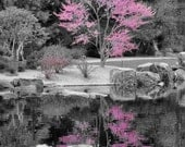 Japanese Garden in Spring - 8 x 10 Photography color splash, pink, reflection, spring bloom, tranquil garden, botanic garden