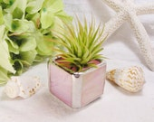 Baby Pink Iridescent  Stained Glass Tillandsia Air Plant Holder (airplant included) - Gift Idea - Wedding Favor - Housewarming - New Baby