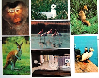 7 Vintage Soviet Postcards - Birds Animals Photo Cards - Monkey Cangaroo Fox Puffin Flamingo Cat Seagull Card Unused - 1980s - Russia / USSR