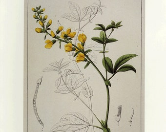CLEARANCE Vintage Botanical Book Print by Prestele
