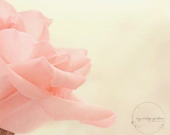 Pretty pink rose-flower photography - flower photo- cottage garden photography (5 x 7 Original fine art photography prints) FREE Shipping)
