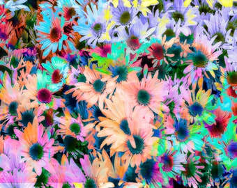 Colorful Daisies, abstract art, Photo, digitally enhanced, wall art, home decor, office art,  nature, large art, abstract, spring flowers,
