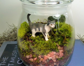 Terrarium, Cat, Moss, Large VIBE Jar ,  Great for HOME or OFFICE. Nice Unusual Gift. Terrariums by mossterrariums on Etsy.