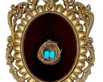 Birds Nest with Blue Eggs in Ornate Frame - Wall Art Decor 7.5x11in