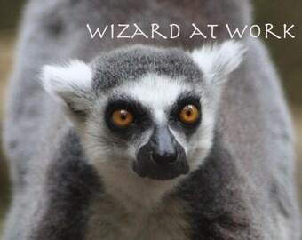 Lemur Photograph - primate, staring, eyes, zoo, mammal, 8x10, matted