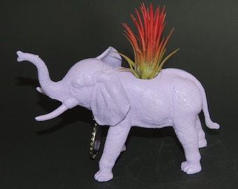 Air plant living in lavender elephant planter.