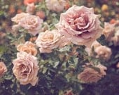 "Rose Garden Photograph, Floral Wall Art, Pink Green, Roses, Still Life, Rose Wall Art, Secret Garden, Nature Photography ""The Rose Garden"""