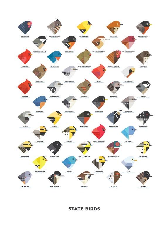State birds digital illustration art print sciox Gallery