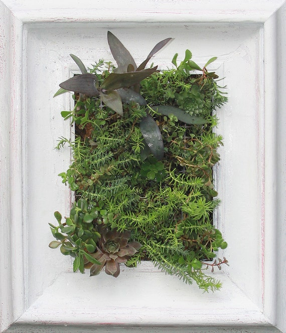Apartment Garden, 16 x 24 Living Wall Planter,comes pre planted and ready to hang