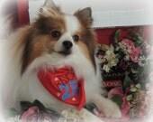 Kisses 25 Cents Valentine's Day Dog Bandana