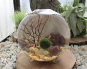 Marimo Terrarium Kit by Midnight Blossom - Miniature Terrarium with living Japanese moss ball - Small footed vase with pebbles and sea fan