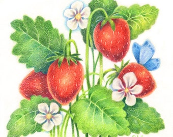 Summer Treat - Original Strawberry Colored Pencil Painting