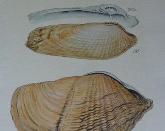 Ocean life, always a good idea, Textured CLAMS & DRIFTWOOD, 1960s Bookplate 2 Sided Beautiful color saturation, MANY in Shop