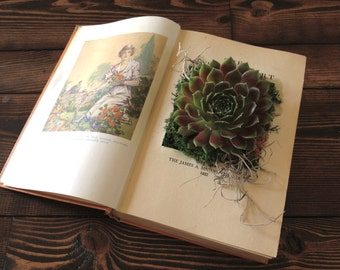 Upcycled Vintage Book Planter for Succulents or Flowers