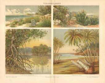 1897 Beach Plants, Shrubbery, Indo-Malay Mangrove, Coco Palm Original Antique Chromolithograph