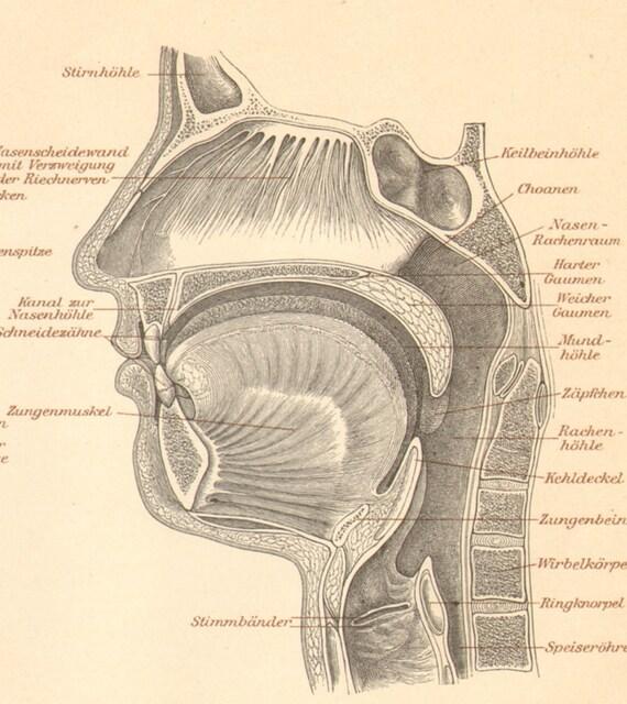 Faringe nasal y oral