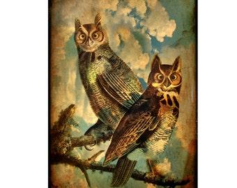 owl, stormy, clouds, sepia, rustic, bird, bird lover