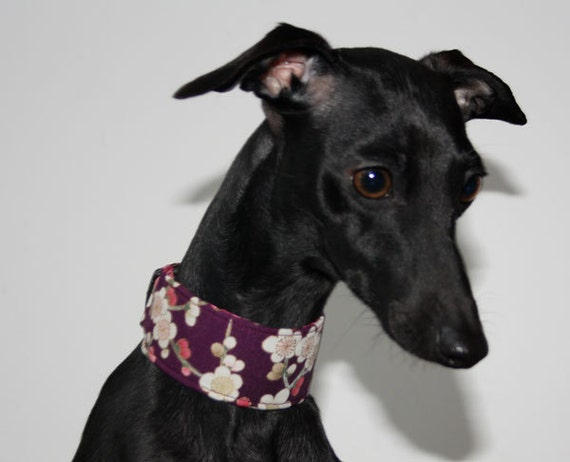 Hanami Collection - Plum Blossom Italian Greyhound Collar lined with Pink Satin
