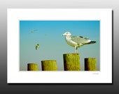 Seagull Photography, Gull Watch, Signed Matted Print, Bird print, Fits 5x7 inch frame
