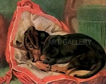DACHSHUND Sleeps on Pillow c.1900's Antique Postcard Art Print MAGNET 77 Doxies Wiener Sausage Dog