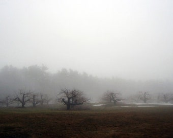 Londonderry Fog 2