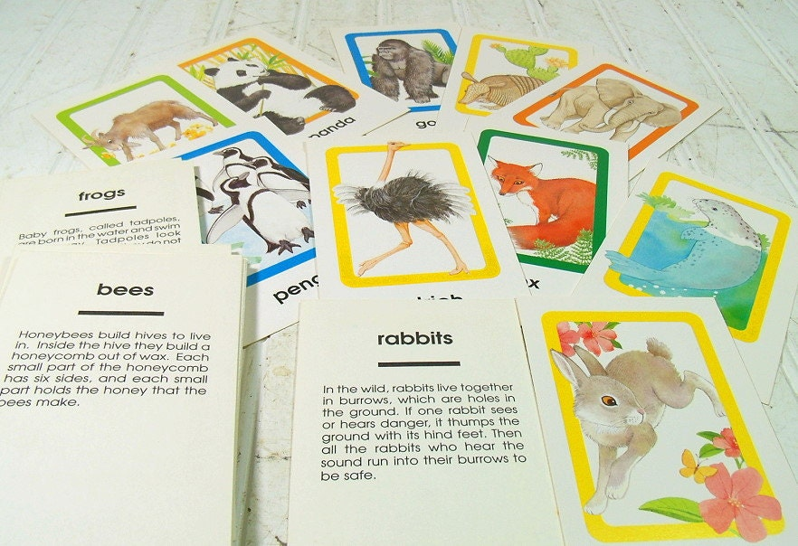 Reserved for YCNeedle Animals of All Kinds Flash Cards