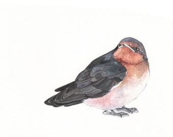 Swallow Painting  print of bird watercolor painting - 5 by 7 print wall art print - bird art - art print - wildlife print
