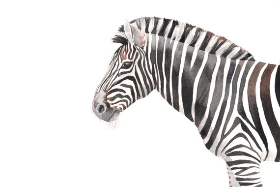 Watercolor painting - Zebra Painting -Z059- animal wildlife art nature black and white print of Watercolor painting  A4 print