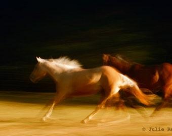 Horse Photography Print - Horse Photo  Running Horses Equine Art Print