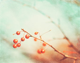 Nature Photography - berry branches orange print mint green light teal aqua brown branch red berries coral print white - 8x10 Photograph