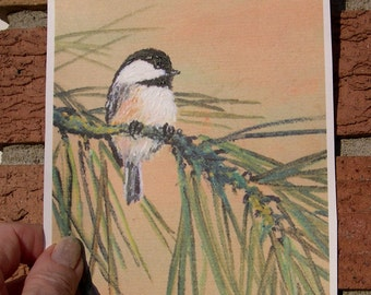 Chickadee on Pine Branch - 5 X 7 Inch PRINT - Bird 1 - Brushstroke Enhanced