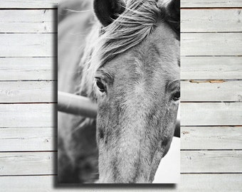 "Close Up - Horse photography - Black and White Horse Photography - 16x24"" canvas print - Horse art - Horse decor - Equine decor"
