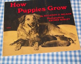 how puppies grow, vintage 1971 children's book