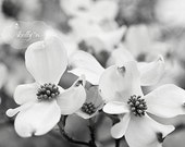 Black and White Flower Photography- Dogwood Flowers Photo, Nature Photography, Floral Art, Black White Spring Flowers Print, Modern Decor