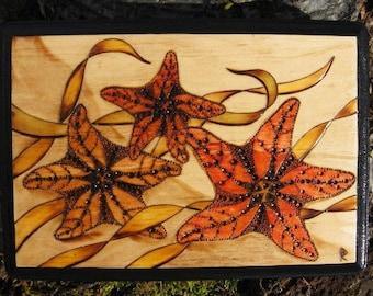"Three Sea Stars Starfish Pyrography Woodburning Plaque 5x7"""