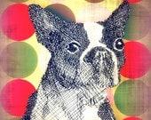 "boston terrier art print giclee collage wildlife art prints Title: ""Boston Terrier Mod"" 8 x 10"