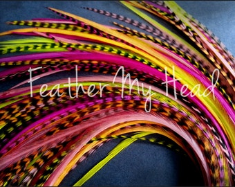 16 Long Feather Hair Extensions, 9-12 inches, New For 2013 Tequila Sunrise, Whiting Grizzly Saddle Hackle