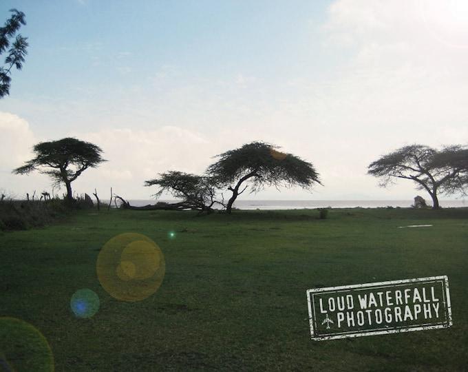 Nature Photography, Acacia Trees, African Landscape, Wanderlust, Ethiopia Wall Art, International Travel 8x12 10x15 12x18 16x24 Photograph